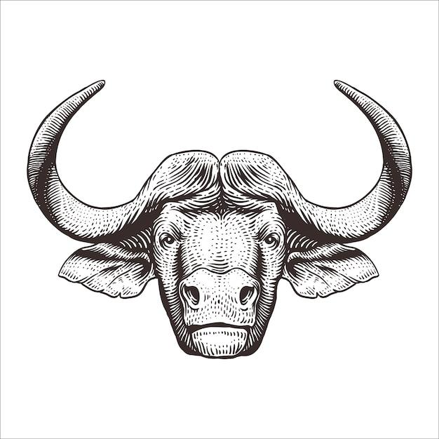 Cabeça búfalo, gravura, ilustração Vetor Premium
