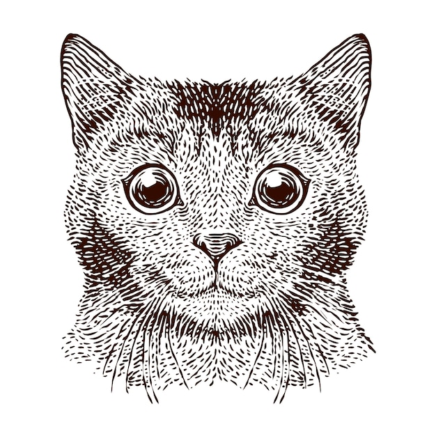 Cabeça de gato vector a ilustração de gravura Vetor Premium