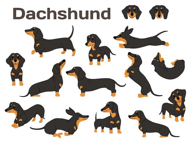 Cachorro dachshund em ação Vetor Premium