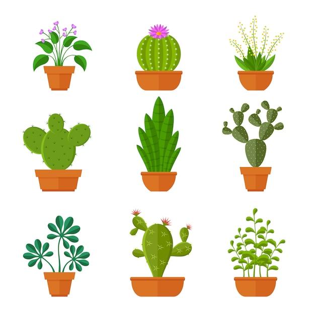Cactos decorativos com flores e plantas em casa em conjunto de panelas. Vetor Premium