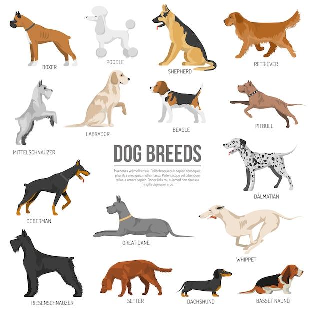 Cães de raça set Vetor grátis