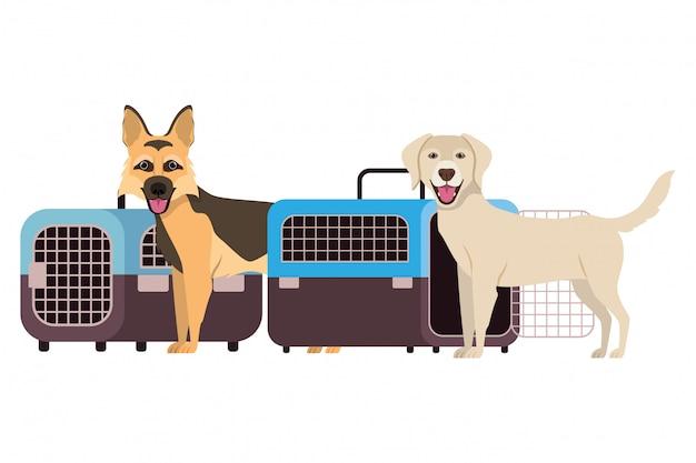 Cães e caixas de transporte para animais de estimação em branco Vetor Premium