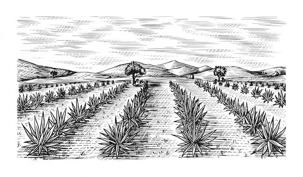 Campo de agave. paisagem retro vintage. colheita para fazer tequila. esboço desenhado mão gravada. estilo xilogravura. ilustração para menu ou cartaz. Vetor Premium