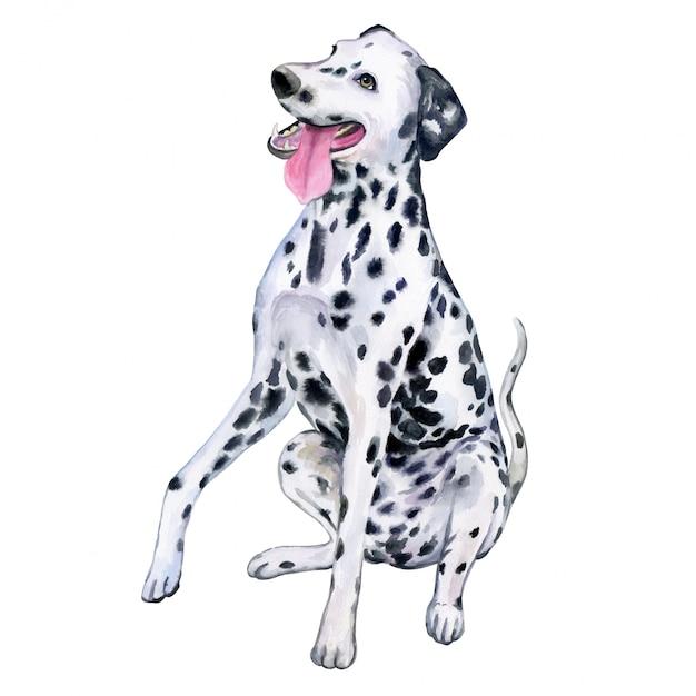 Cão dálmata em aquarela Vetor Premium