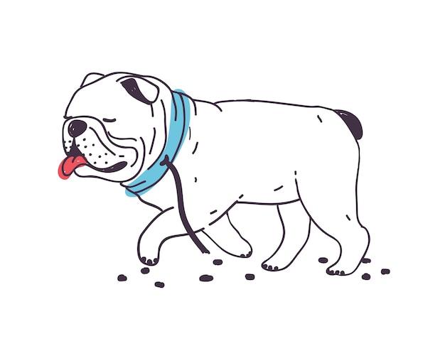 Cão engraçado que fugiu andando com a coleira rasgada. bulldog travesso bonito isolado. mau comportamento de animal doméstico ou animal de estimação Vetor Premium