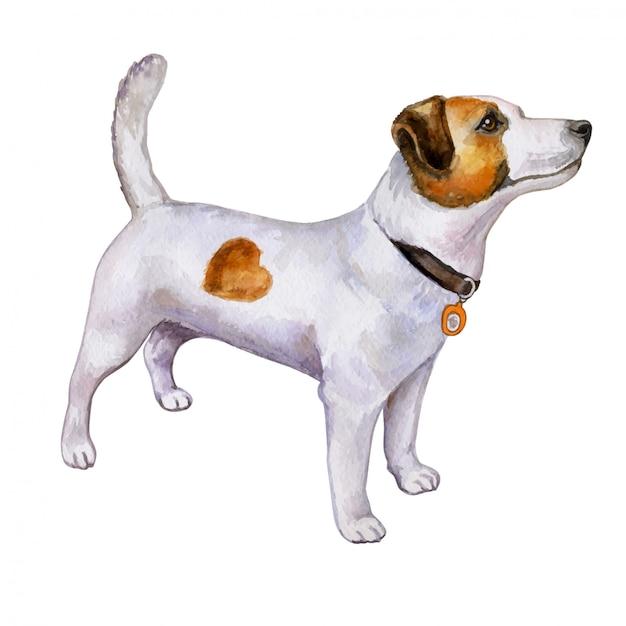 Cão jack russell terrier em aquarela Vetor Premium