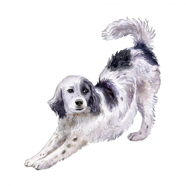 Cão setter inglês em aquarela Vetor Premium