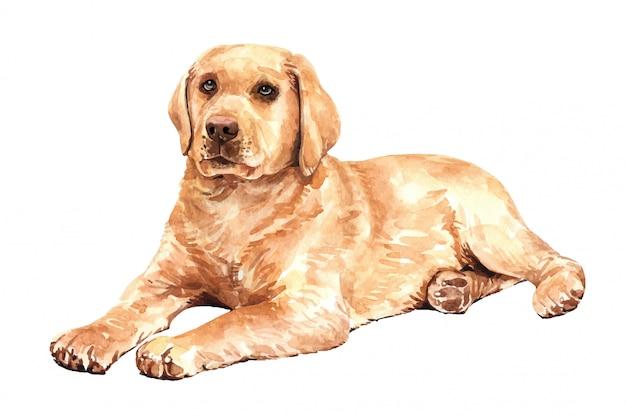 Cão tirado mão da aquarela de labrador retriever. Vetor Premium