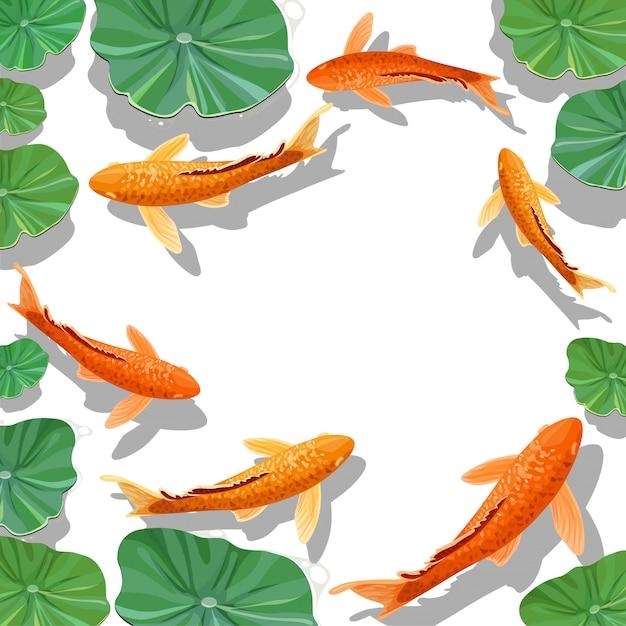 Carpa koi peixe sob fundo de água Vetor Premium