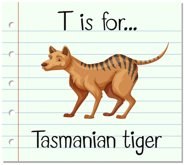 Cartão de memória letra t é para tigre da tasmânia Vetor grátis