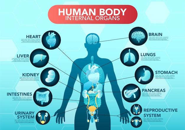 Cartaz de infográfico plana de esquema de órgãos internos do corpo humano com ícones Vetor Premium