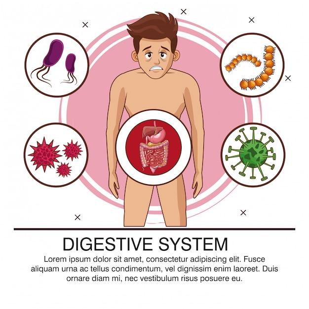 Cartaz do sistema digestivo com informações Vetor Premium