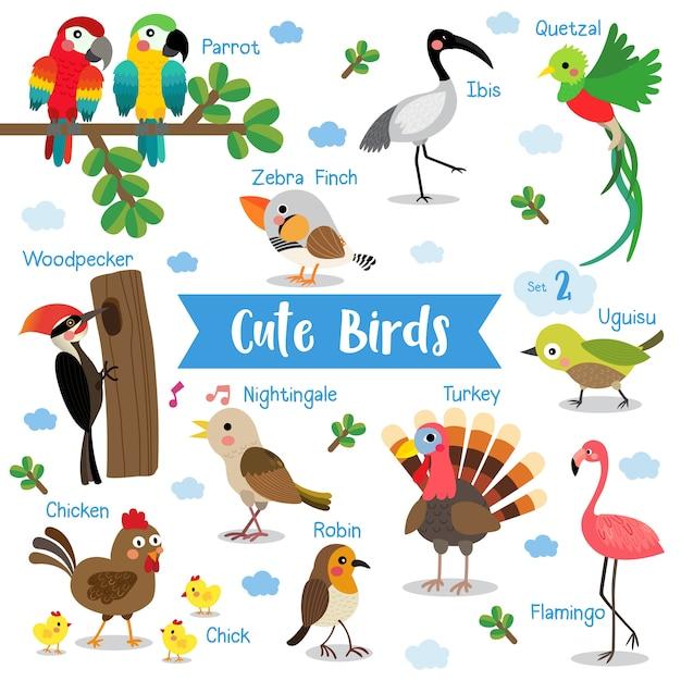 Cartoon animal de pássaro bonito com nomes de animais Vetor Premium