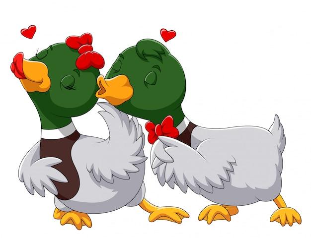 Casal pato apaixonado e beijando Vetor Premium