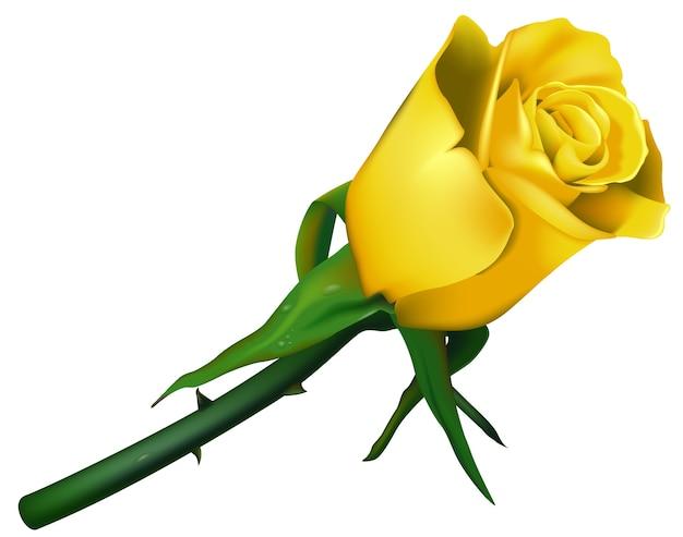 Casamento amarelo rosa com espinhos Vetor Premium
