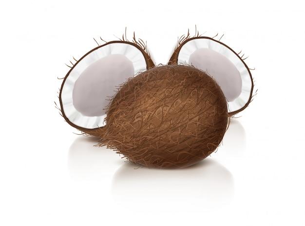 Casca de coco inteira e meio quebrada Vetor grátis