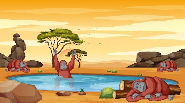 Cena com chimpanzé na ilustração lagoa Vetor grátis