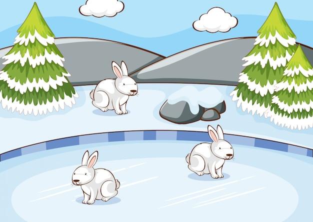 Cena com coelhos no inverno Vetor grátis