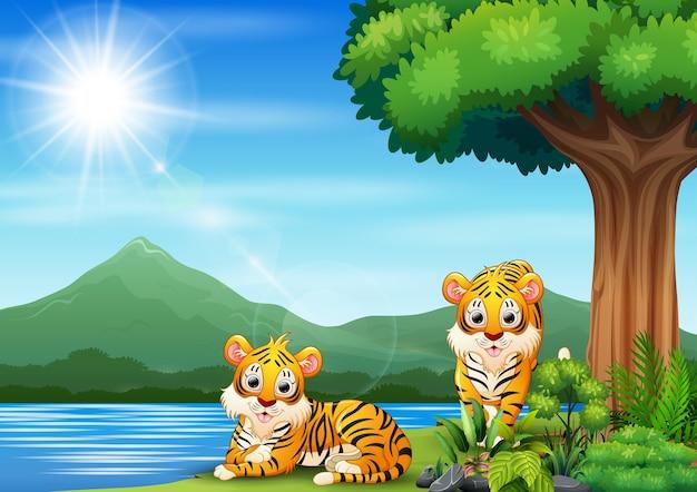 Cena com dois tigres à beira do rio Vetor Premium