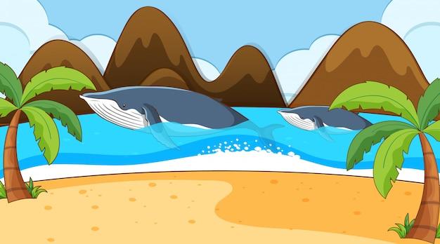 Cena com duas baleias no oceano Vetor grátis