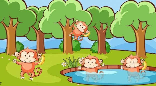 Cena com macacos bonitos na floresta Vetor grátis
