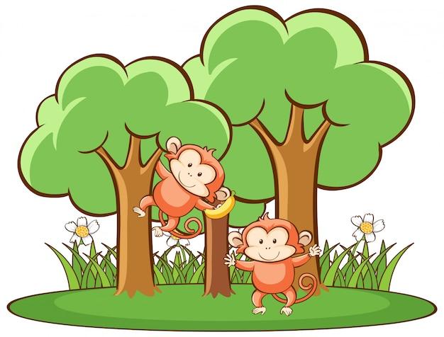 Cena com macacos na floresta Vetor grátis