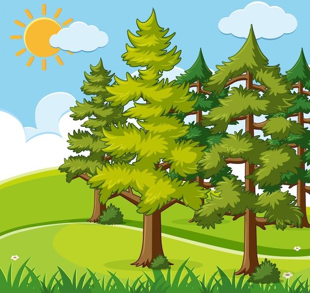 Cena de fundo com pinheiros no campo Vetor Premium