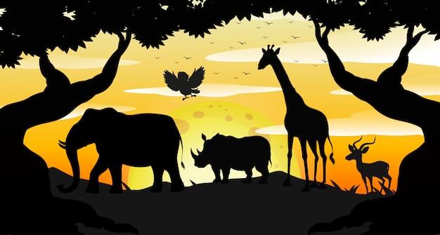 Cena de safari silhueta ao amanhecer Vetor grátis