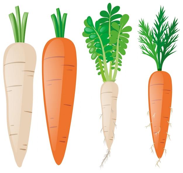 Cenouras em diferentes formas Vetor grátis
