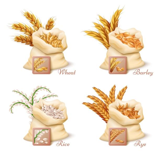Cereais agrícolas Vetor Premium