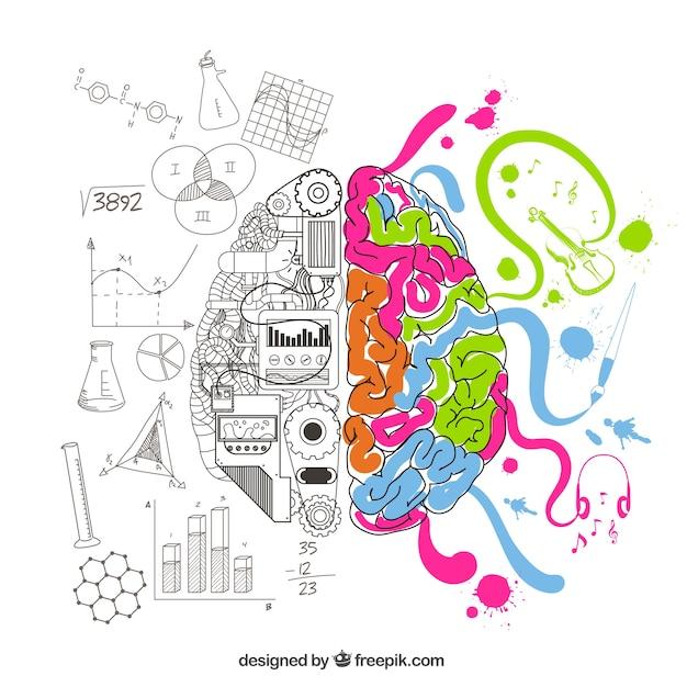Cérebro analítico e criativo Vetor grátis