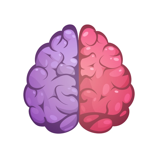 Cérebro humano, dois, diferente, colorido, simbólico, esquerda, e, direita hemisférios cerebrais, modelo, imagem, ícone, abst Vetor grátis