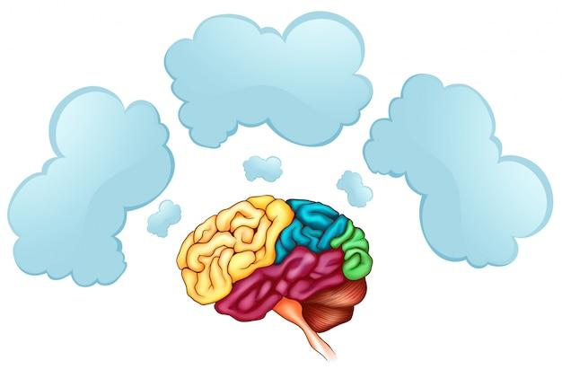 Cérebro humano e três bolhas Vetor grátis