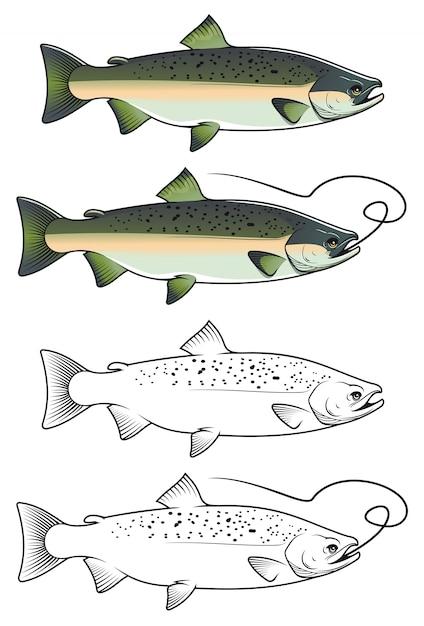 Chum salmon fish Vetor Premium