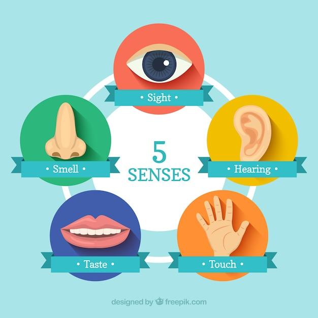 Cinco sentidos ícones Vetor grátis
