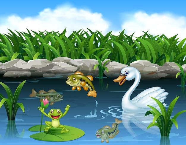 Cisne bonito nadando na lagoa e sapo Vetor Premium