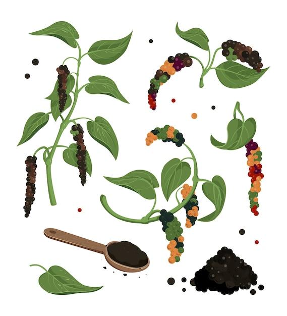 Clipart de pimenta preta. planta de pimenta preta com folhas e grãos de pimenta, ícones isolados. Vetor Premium