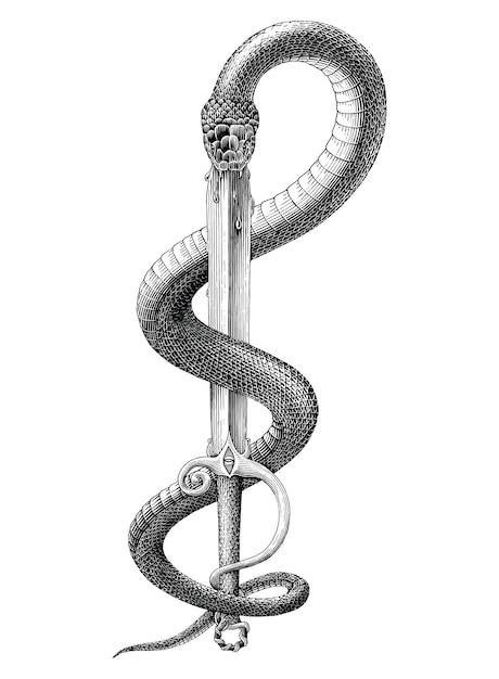Cobra preta e branca presa na espada em estilo de gravura Vetor grátis