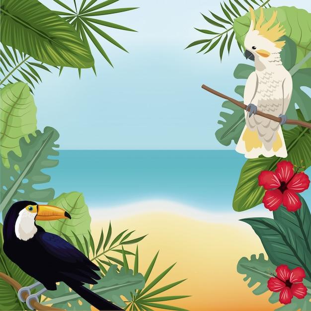 Cockatoo e toucan deixa praia tropical Vetor Premium