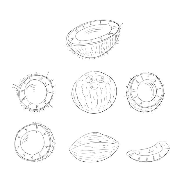 Coco inteiro e corte em metades conjunto de ilustrações de contorno de mão desenhada Vetor Premium