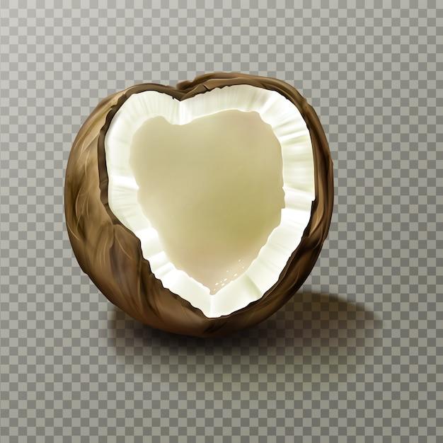 Coco realista, noz de coco vazia altamente detalhada Vetor grátis