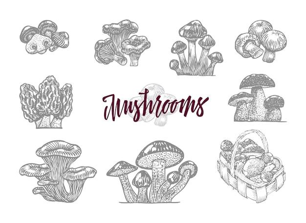 Cogumelo cinza gravado com grande título vínico e cogumelos silvestres isolados Vetor grátis