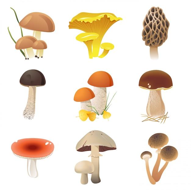 Cogumelos comestíveis Vetor Premium