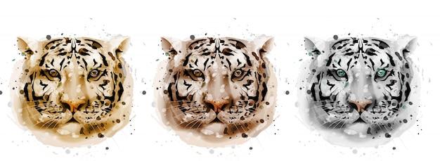 Coleção de aquarela de tigres Vetor Premium