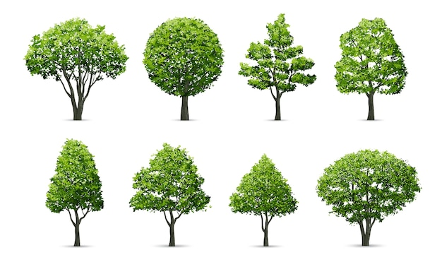 Coleção de árvore isolada no fundo branco. Vetor Premium