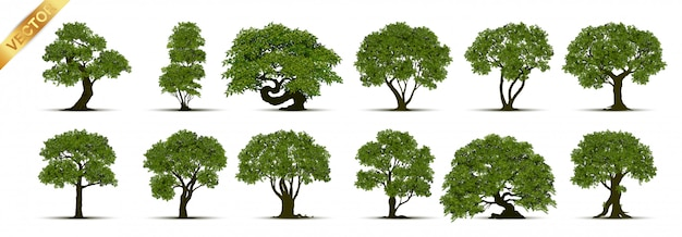 Coleção de árvore Vetor Premium