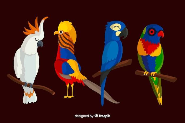 Coleção de aves exóticas design plano Vetor grátis