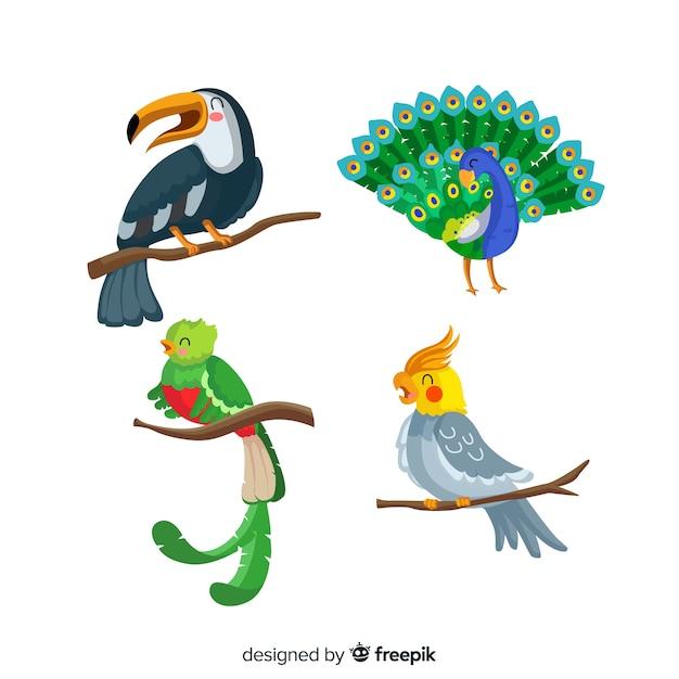 Coleção de aves planas exóticas Vetor grátis