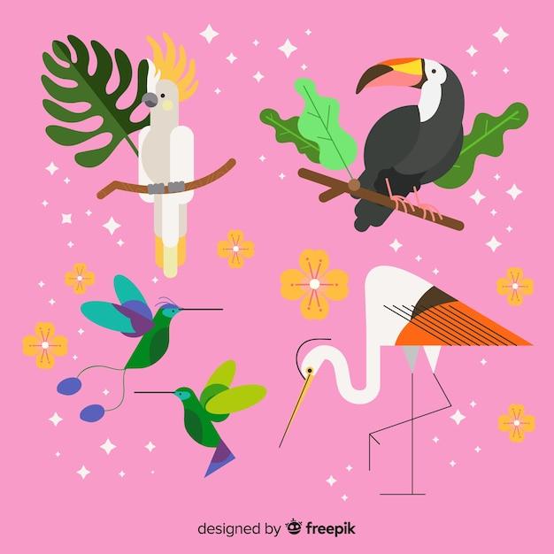 Coleção de aves selvagens tropicais exóticas Vetor grátis