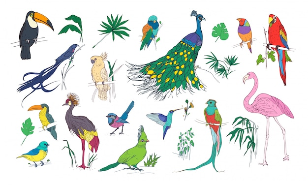 Coleção de belas aves exóticas tropicais com plumagem colorida brilhante e folhas de plantas da selva Vetor Premium